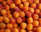 Абрикос — самый полезный фрукт для сердца