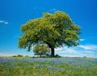 «Денежное дерево» Древней Руси